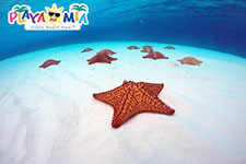 Things to Do in Cozumel: El Cielo Beach & Starfish Sanctuary