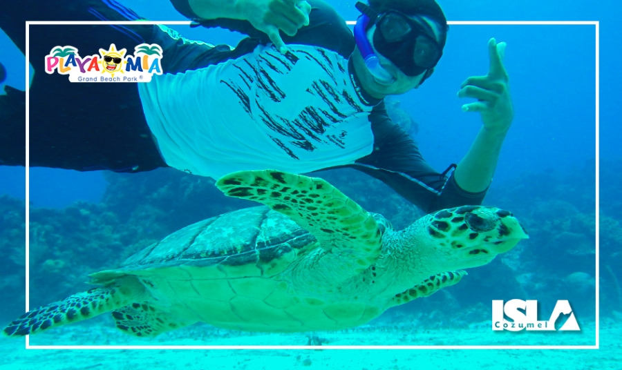 Discover Why Cozumel is the #1 Scuba Diving & Snorkeling Destination
