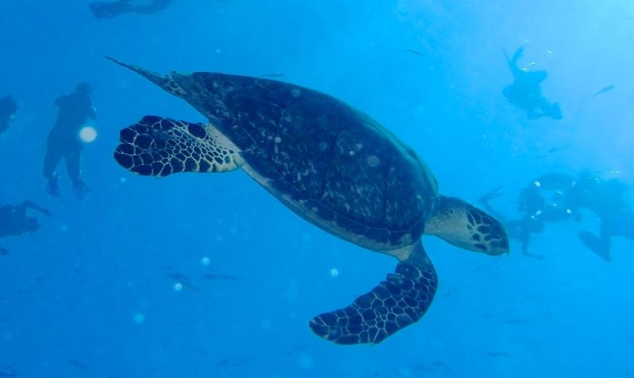 Qué hacer en Cozumel: nado con esnórquel en el arrecife Colombia