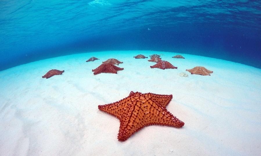Qué hacer en Cozumel: El Cielo y el Santuario de las Estrellas de mar