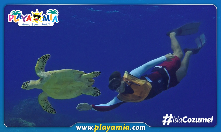 Cozumel Travel Tips - Sea Turtle Season Is From May Through November