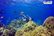 Snorkel Colombia Reef