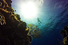 Arrecife Bajos de Colombia, la joya del esnorquel en Cozumel